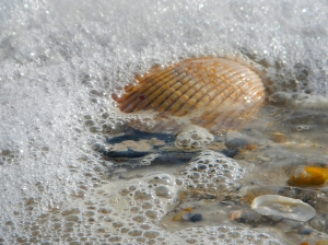 shells-in-surf-sgi-stpk-blog