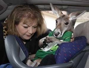 kangaroo-800wi