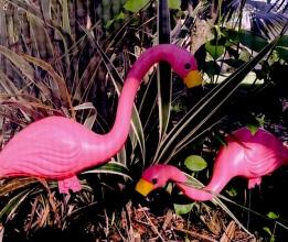 final flamingo