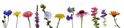 flower_collection_ii_by_eirian_stock-d45rbpc