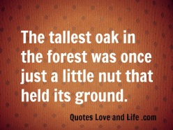 Inspiration-Inspirational-Words-Messages-Quotes-Word-Sayings-Message-The-tallest-oak-in-the-forest-was-once-just-a-little-nut-that-held-its-ground