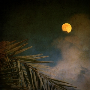 florida-moon-susanne-van-hulst