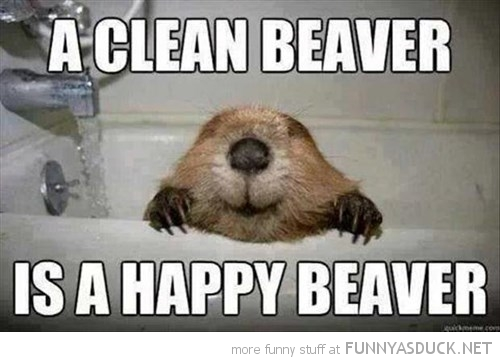 funny-pictures-clean-happy-beaver