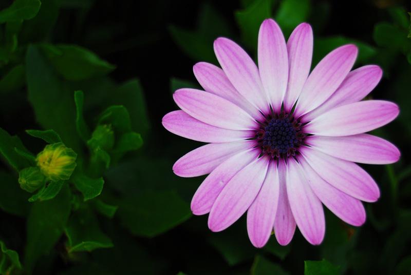 Purple-Flower-800