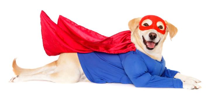 hero-dog-712x378