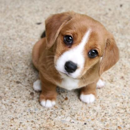 puppy-e1431465791294