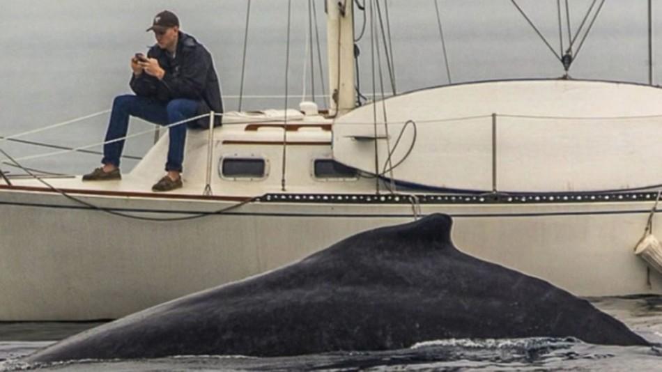texting-missing-the-whale-d971cfc71675698e4e2696b0eebbb084-1024x576.jpg
